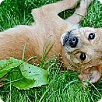 Adopt A Pet :: Piper - Hastings, NY