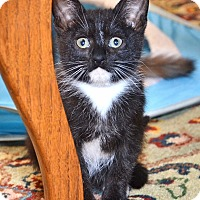 Adopt A Pet :: Jack Frost - Davis, CA