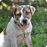Adopt A Pet :: Chloe - Ormond Beach, FL