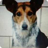 Adopt A Pet :: Duke - Kendall, NY