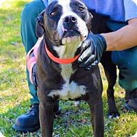 Adopt A Pet :: Buttercup - Whiteville, NC