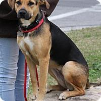 Adopt A Pet :: Regina - Kennesaw, GA