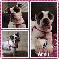 Adopt A Pet :: Annie - Ponca City, OK