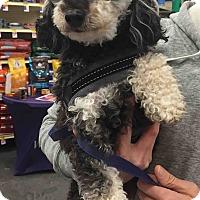 Adopt A Pet :: Rocket - Loudonville, NY