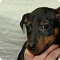 Adopt A Pet :: Mugsy - South Jersey, NJ
