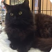 Adopt A Pet :: Katherine - Modesto, CA