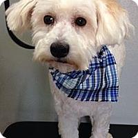 Adopt A Pet :: LARRY - South Gate, CA