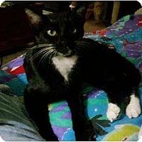 Adopt A Pet :: JoJo - Little Rock, AR