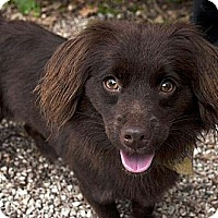 Adopt A Pet :: Candy ADOPTED!! - Antioch, IL