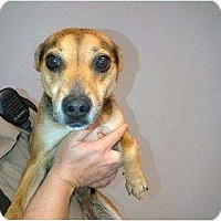 Adopt A Pet :: Tiny Marie - Alliance, NE