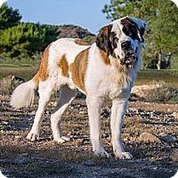 Adopt A Pet :: Frankie - Glendale, AZ