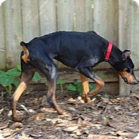 Adopt A Pet :: Lester - Kingwood, TX