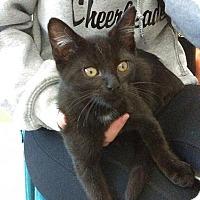 Adopt A Pet :: Boo Boo - San Jose, CA