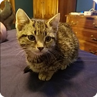 Adopt A Pet :: Colby - Hainesville, IL