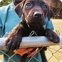 Adopt A Pet :: SAKURA - Williston Park, NY