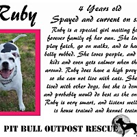 Adopt A Pet :: Ruby - Lafayette, OR