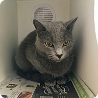 Adopt A Pet :: Smokey - Nashville, TN