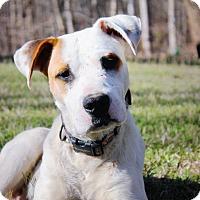 Adopt A Pet :: HARLEY - Moosup, CT