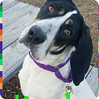 Adopt A Pet :: Kendra **In Foster home** - Breinigsville, PA