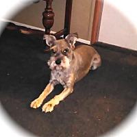 Adopt A Pet :: Dex - Winter Haven, FL