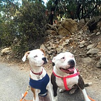 Adopt A Pet :: Piper - Orange, CA