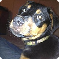 Adopt A Pet :: Dolce - Conyers, GA