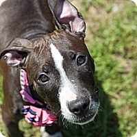 Adopt A Pet :: Coco - Reisterstown, MD