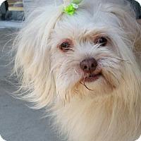 Adopt A Pet :: Caesar - REDDING, CA