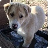 Adopt A Pet :: Forrest - Quinlan, TX