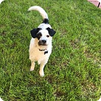 Adopt A Pet :: Captain - Fountain Valley, CA
