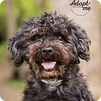 Adopt A Pet :: Sampson - Cincinnati, OH