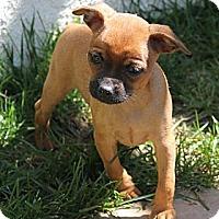 Adopt A Pet :: Dinky - La Habra Heights, CA