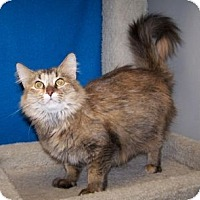 Adopt A Pet :: Talia - Colorado Springs, CO