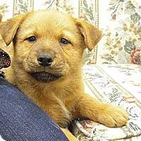 Adopt A Pet :: Clifton - Wickenburg, AZ