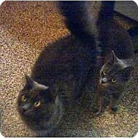 Adopt A Pet :: Cookie & Shadow: URGENT! - Quincy, MA