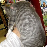 Adopt A Pet :: Pavel - Dallas, TX