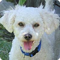 Adopt A Pet :: Donny - La Costa, CA