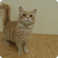 Adopt A Pet :: Applesauce - Milwaukee, WI