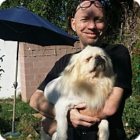 Adopt A Pet :: King Leo - SO CALIF, CA