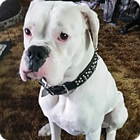 Adopt A Pet :: Zeus - list - Tillamook, OR