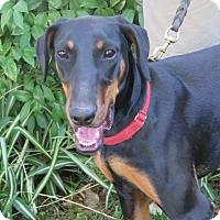 Adopt A Pet :: Jodie - Tracy, CA