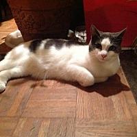 Adopt A Pet :: Gracie (Courtesy Listing) - Hampton, VA