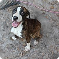 Adopt A Pet :: Ruby - Groveland, FL