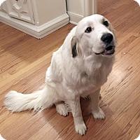 Adopt A Pet :: Muffin  *Adopted - Tulsa, OK
