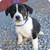 Adopt A Pet :: Albury - Harrisonburg, VA