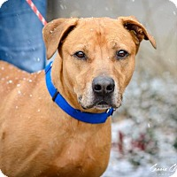 Adopt A Pet :: 48635 Nugget sponsored $40 plus tags - Zanesville, OH