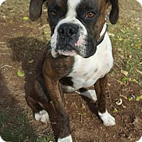 Adopt A Pet :: Remi - Phoenix, AZ