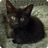 Adopt A Pet :: Lucinda - River Edge, NJ