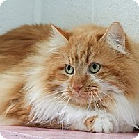 Adopt A Pet :: Leo - Anderson, IN