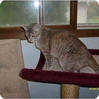 Adopt A Pet :: Jazmin - Milwaukee, WI